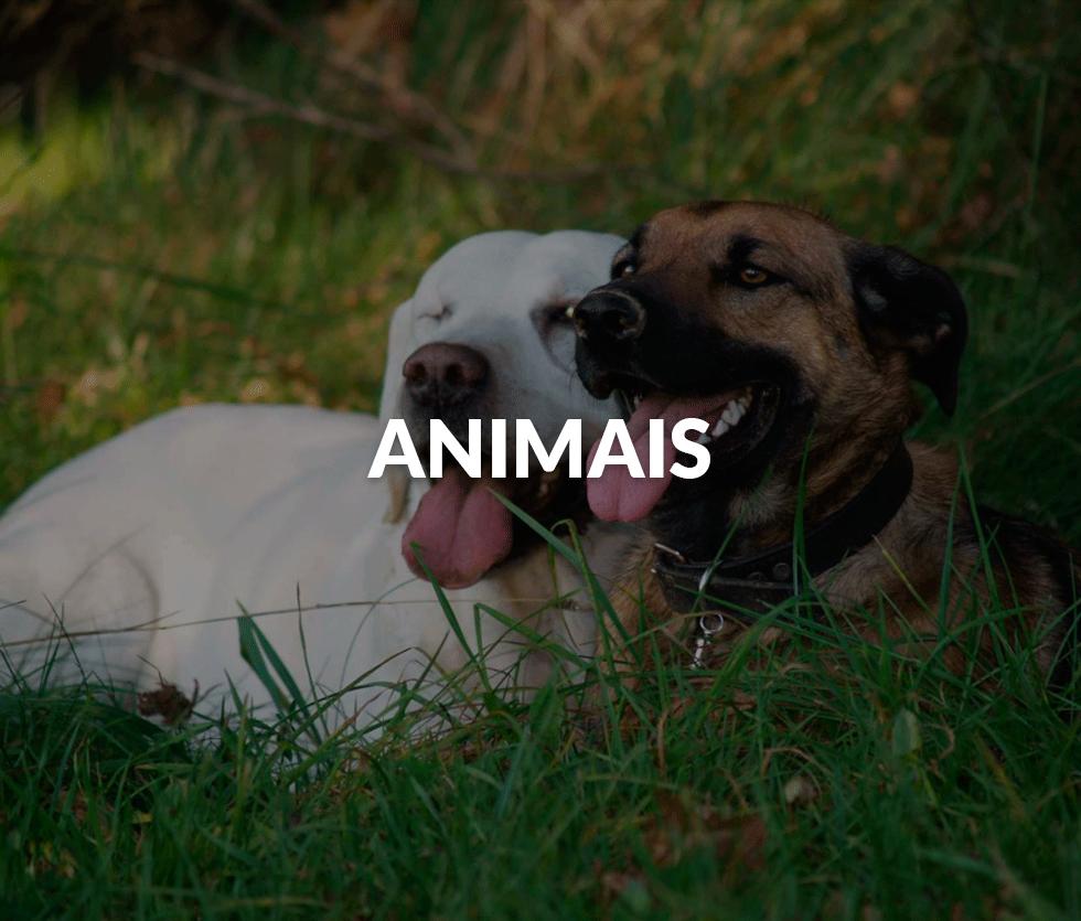 animais-2